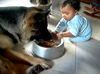 baby-and-dog-fight-over-food (1)