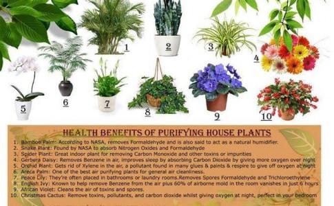 8 φυτά που θα δώσουν καλή ενέργεια στο σπίτι σας!