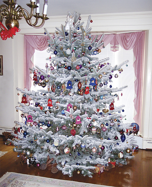 Types-Of-Christmas-Trees